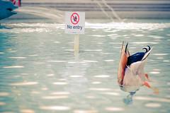 who cares? (gian_tg) Tags: trafalgarsquare duck signpost fountain crazytuesdaytheme symbols 7dwf streetphotography londonuk