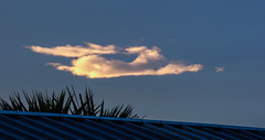 It Is No Rain (Steve Taylor (Photography)) Tags: animal dog rabbit roof blue green metal newzealand nz southisland canterbury christchurch northnewbrighton corrugated shape summer cloud sky cape ears flying