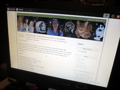 20150910 - Carolyn Casl is REAL! - CarolynCASL is REAL! - IMG_0587 (Rev. Xanatos Satanicos Bombasticos (ClintJCL)) Tags: 20150910 201509 2015 blog blogheader header hardware monitor virginia alexandria clintandcarolynshouse upstairs carolyn facebook wordpress