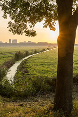 Sunrise over the Country (genf) Tags: sunset country meadow weiland tree leaves boom bladeren sloot ditch warm color warme kleuren flats flat buildings landscapte outdoor sony a77