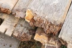 192 Haithabu WHH 21-08-2016 (Kai-Erik) Tags: geo:lat=5449121160 geo:lon=956677814 geotagged haithabu hedeby heddeby heiabr heithabyr heidiba siedlung frhmittelalterlichestadt stadt wikingerzeit wikinger vikinger vikings viking vikingr huser vikingehuse vikingetidshusene museum archologie archaeology arkologi arkeologi whh wmh haddebyernoor handelsmetropole museumsfreiflche wall stadtwall danewerk danevirke danwirchi oldenburg schleswigholstein slesvigholsten slesvigland deutschland tyskland germany bohlenwand reparatur zweitesskaldentreffen geschichtenerzhler musiker gruppesitram thomaspetersen jorgederwanderer urdvaldemarsdatter mittelalterlichemusikinstrumente skalden thorshammeralsamulettauszinngegossen 21082016 21august2016 21thaugust2016 08212016 httpwwwhaithabutagebuchde httpwwwschlossgottorfdehaithabu