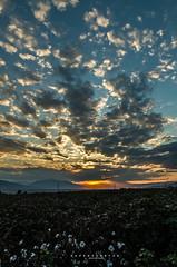 vanilla fields (papkostantin) Tags: fields nature landscape naturelandscape vanilla sunset valley river sperchios greece ftiotida lamia cotton colors pentax sky clouds skyporn