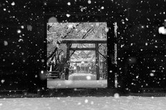 Beyond the Gate (Yuya Sekiguchi) Tags: street winter shadow blackandwhite tree monochrome japan night photoshop scenery raw december flag flash snowstorm culture dec   torii    hdr soggy frontgate 2012 mainentrance naganoprefecture accumulation  jinjya   12     d90 shrinegate  photomatix        uedacity  unwalkable rokumonsen     sanadashrine 2012 uedajyocastleremains flaesofsnow ohtemongate