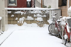 Heavy Snow City in Omiya Saitama (Norio.NAKAYAMA) Tags: snow japan  saitama  omiya
