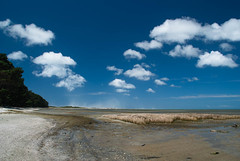 Follow the Clouds (Jocey K) Tags: trees sea newzealand sky water clouds sand day driftwood sandstorm nz southisland goldenbay farewellspit pwpartlycloudy