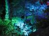 sercet valley 2 (GIALIAT) Tags: pink blue red plants white black green water animal yellow gardens night fun botanical lights concert pond bush magic creative january event blacklight wellington local duckpond asb beegees 2013 gialiat pallion lightshop silverfx