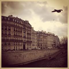Today everything is gloomy and i... (serene movement) Tags: bridge paris bird architecture island gloomy today seineriver devastating ilesaintlois igersparis uploaded:by=flickstagram instagram:photo=336071979978303961686129