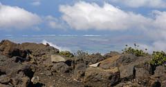 Haleakala - 7 (VKesse) Tags: ocean clouds landscape hawaii maui haleakalavolcano