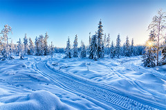January on Finland (Puuronen) Tags: blue winter snow forest suomi finland january trails lumi talvi spruce snowmobile mets kajaani kainuu kuusi