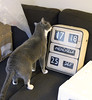 Le chat se demande... (clockspot) Tags: italy clock flip udine solari dator