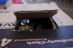 Having Fun in the Boxes (emilykember) Tags: rabbit bunny canon grey bokeh box sigma ears disney luna cardboard pixar 365 walle 30mm netherlanddwarf 50d itsagiraffe walle365