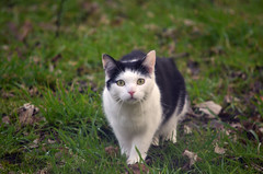 Have you confused your cat recently? (nic_r) Tags: cat confused perplexed concerned