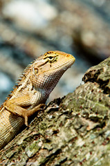 Tree Lizard (Aditya Pepe Pratama) Tags: lizard macrophotograph