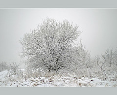 Tree (aka malec) Tags: trees winter sky white mountain snow cold tree ice grass fog clouds forest petals frost loneliness sam box joy poland polska dry petal willow same zima spruce nieg ld mrz trawa drzewo chmury niebo sucha rado biay samotno wierk zimno patki patek