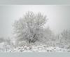 Tree (aśka malec) Tags: trees winter sky white mountain snow cold tree ice grass fog clouds forest petals frost loneliness sam box joy poland polska dry petal willow same zima spruce śnieg lód mróz trawa drzewo chmury niebo sucha radość biały samotność świerk zimno płatki płatek