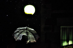 Ordu txikiak (Erre Taele) Tags: bilbao bizkaia euskalherria bilbo basquecountry paysbasque rainning
