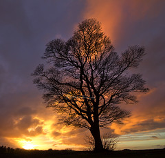 Tree on fire..... (Digital Diary........) Tags: tree fire backlit epic contrejour crank treeonfire epiclight