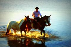Cruzando a sanga (Eduardo Amorim) Tags: brazil horses horse southamerica field água brasil criollo caballo cheval atardecer caballos agua dam barragem campo cavalos pelotas damm pferde cavalli cavallo cavalo gauchos pferd riograndedosul barrage pampa poniente champ anoitecer aguada campanha brésil chevaux gaucho entardecer crepúsculo 馬 américadosul açude poente diga gaúcho amériquedusud лошадь gaúchos 马 sudamérica suramérica américadelsur südamerika crioulo caballoscriollos criollos حصان costadoce americadelsud crioulos cavalocrioulo americameridionale holidaysvacanzeurlaub caballocriollo auffangen eduardoamorim cavaloscrioulos travelsofhomerodyssey iayayam yamaiay