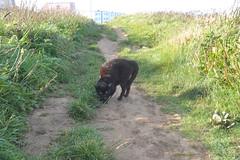 1032 Kampfkatze (Pixelkids) Tags: uk summer england coast cornwall porth coastalpath swcoastalpath summer2012