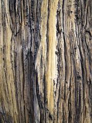 fpx021913-04 (fontplaydotcom) Tags: wood texture joshuatree