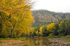 IMG_1103 (berserker170) Tags: eos 550d tree arbol hoja fall otoño puertopeña canon autumn garcia sola puerto peña garciasola flickrexploreme