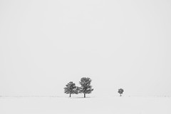Minimal Snowstorm (Ryan C Wright) Tags: trees winter snow nature landscape colorado stock snowstorm boulder minimal grayscale minimalism simple frontrange minimalistic whiteout lonelytree naturephotography greenbeltplateau