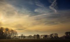 Line of Trees (Natasha Bridges) Tags: morning trees mist sunrise dawn shropshire wrekin