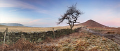 Roseberry Larch pano #2 (YorkshireSam) Tags: morning winter england panorama mist tree clouds canon landscape countryside scenery frost yorkshire landmark moor northyorkshire roseberrytopping northyorkshiremoors northeastofengland drystonewalling yorkshiresam