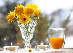 Morning sunshine (SolsticeSol) Tags: beautifulflowerpictures beautifulflowerimages