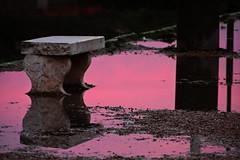 pozzanghera rosa (duegnazio) Tags: duegnazio canon 40d 2013 rosa panchina pozzanghera tramonto circomassimo roma lazio acqua romamor vivid reflexions italy rome