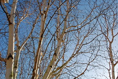 DSC_0005 (TiffanyxH) Tags: blue trees sky sun sunlight cold texture lines contrast bright random shapes calm clear attractive strong chilly flowing powerful tone darklight blending harmonious