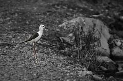 # Edited - Israel birds (TOmShAhaR_PhOTo_) Tags: bird israel nice nikon north n 70 70300 neture isreali 70300ed strobist nikond5100 70300f4556ed 70300ed3556vr2