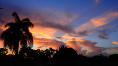 After the Storm (Jim Mullhaupt) Tags: sunset sundown dusk sun evening endofday sky clouds color red gold orange pink yellow blue tree palm silhouette weather tropical exotic wallpaper landscape nikon coolpix p900 bradenton florida jimmullhaupt cloudsstormssunsetssunrises photo flickr geographic picture pictures camera snapshot photography nikoncoolpixp900 nikonp900 coolpixp900