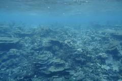 House reef (survivingmaldives) Tags: jumeirah vittaveli maldives survivingmaldives