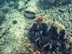 W-IMG_2572 (baroudeuses_voyage) Tags: ocean sea coral oz australia diving snorkeling cairns reef greatbarrierreef cay eastcoast australie atoll gbr michaelmascay oceanspirit grandebarrieredecorail
