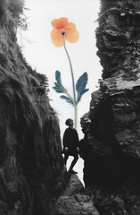 Growth II (Tasha Mare) Tags: film analog photography composite flowers plants overlay overlap colalge collage ilford black white surreal surrealism concept portrait conceptual