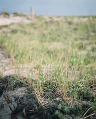 Beachgrass. (kenneth.pelczar) Tags: soul living photography fun america usa newyork longisland green summer color negative 160asa 105mm 2016 camera film colors grain ishootfilm iso160 kodakportra 160 kodak portra fujifilm analogue 6x7 pentax asahi