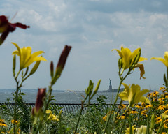 Statue of Liberty (Peter E. Lee) Tags: garden summer manhattan statueofliberty nyc flower bay newyork water 2016 yellow newyorkcity ny unitedstates us
