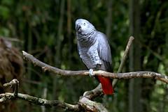 Le bel perroquet/  the beautiful parrot (Chemose) Tags: oiseau bird parcdesoiseaux park ain villarslesdombes dombe france canon eos 7d hdr juillet july summer parrot perroquet