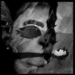 Eye See You (Jane Schultz) Tags: iphonography shootermagazine mobileart nemself iphoneartism mastersofdarkness unitedbyedit nemsubmissions impossiblehumans selfportrait darkarts themaximalsmoreeditjuxtmaxit