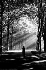 (CarolienCadoni..) Tags: sonyslta99 sal2470z blackandwhite sun sunbeams sunlight silhouette backshot trees road outside outdoor boomkroonpad drouwen drenthe nederland netherlands earlymorning