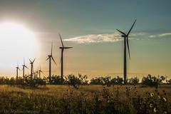 West Texas Morning (17 of 40) (mharbour11) Tags: wildcats elk purple sunrise westtexas texas sky windturbines windmill sun silhouettefire silhouette