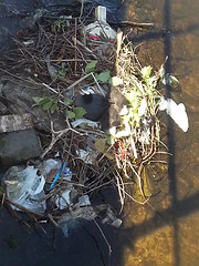 an urban coot nest in the canals of Amsterdam city; Photography of The Netherlands; geo-tagged free photo in public domain  Fons Heijnsbroek (Amsterdam city photos, geotagged) Tags: urban fauna water canal amsterdam nest animals waste rubbish coot picture city built publicdomain publiekdomein nocopywright freedownload fonsheijnsbroek ccophotography freephotos photofree opensourcephotos geotagged thenetherlands commons photography amsterdamcity outdoor