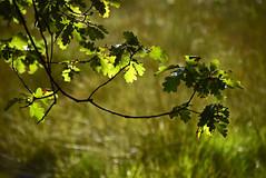 Zweig nicht ab (CreactCult) Tags: zweig baum herbst grn wiese schatten tree autumn green meadow shadows