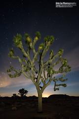 joshua tree (Eric 5D Mark III) Tags: california longexposure light sky usa cloud moon color tree silhouette vertical night canon landscape photography star unitedstates nps joshua wideangle midnight twentyninepalms joshuatreenationalpark ericlo tse17mmf4l eos5dmarkiii 5d3 tse17l