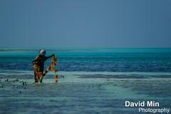 Jambiani, Zanzibar - Fisherwoman (GlobeTrotter 2000) Tags: africa travel sea woman seaweed tourism stone tanzania island town fisherman sand paradise peace tide low visit fisher tropical rest zanzibar paje jambiani