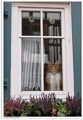 Ich sehe dich! - I see you!