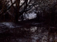 (spratpics) Tags: winter england snow flooding spooky swamp teesside billingham spookymagic billinghambeck teessideengland artworkbypaulwalker spookyartworkandphotographybypaulwalker