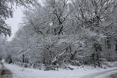 Cottage at Maxstoke (3) (Bovine Spongiform Encephalopathy) Tags: park winter snow nude birmingham candid nudist naturist snowing various warwickshire brum nudists funinthesun naturists pypehayes funinthesnow fillongley sunclub maxstoke raywilkes raymondwilkes