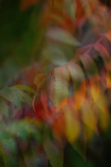104-1 (Girardartist) Tags: abstract abstraction artphotography photoartistique